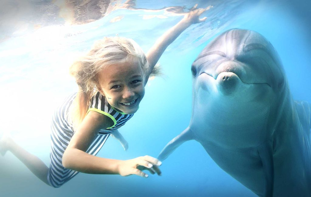 Is a Dolphin Smarter than a 5th grader -Dolphin Discovery-