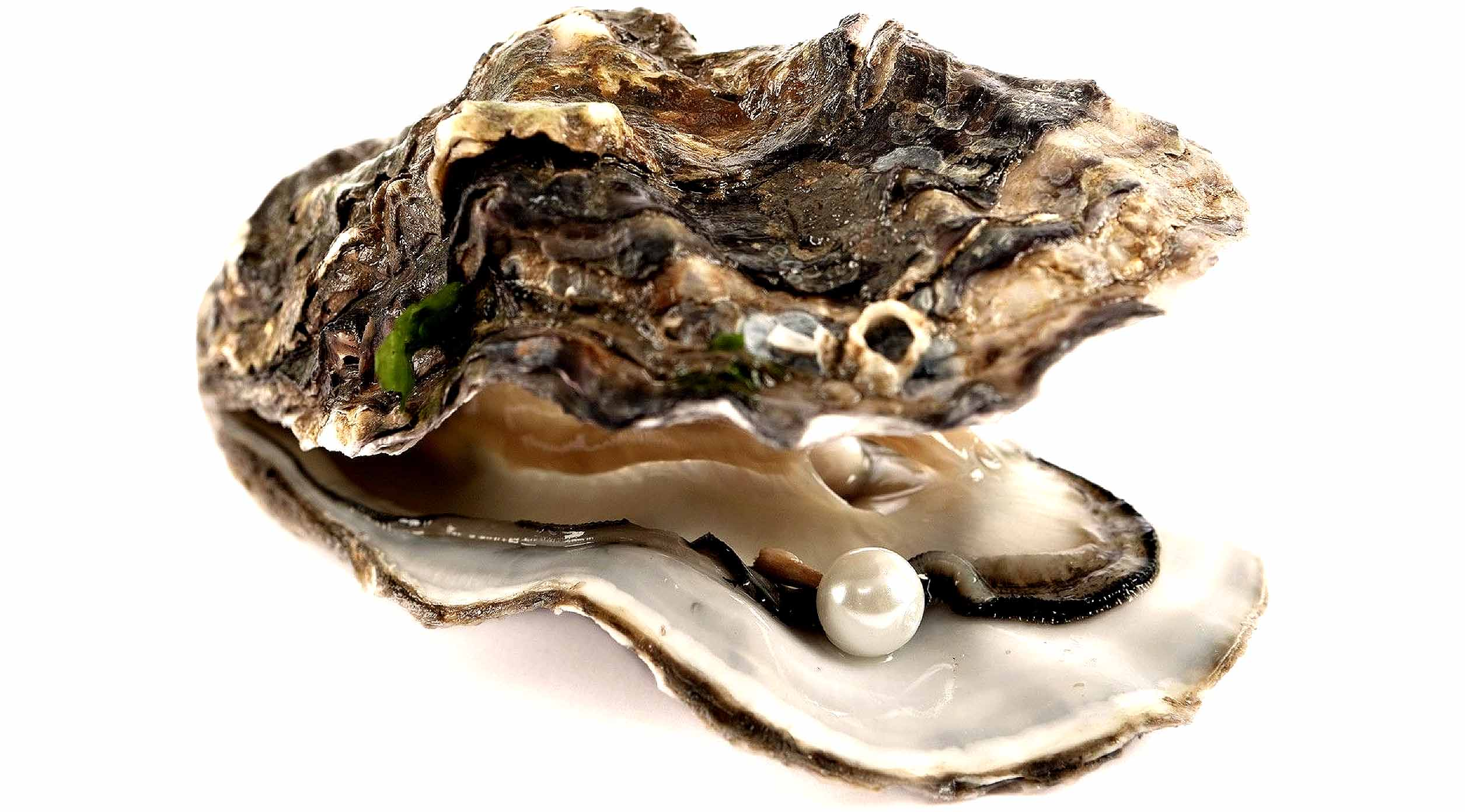 GET YOUR OYSTER ON BABY!